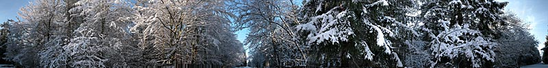 Perlacher Forst im Schnee, Munich, Germany - panorama - click to open it in a new window