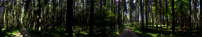 Forest near Deininger Weiher, Germany - panorama - click to open it in a new window